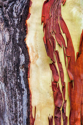 Designs Similar to Madrone Tree Bark 01