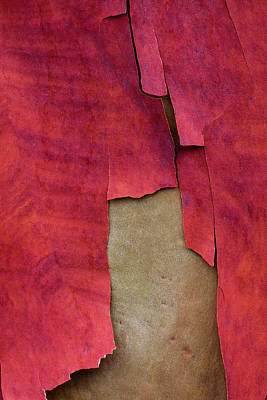Designs Similar to Madrone Tree Bark 05
