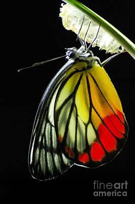 Entomological Photographs