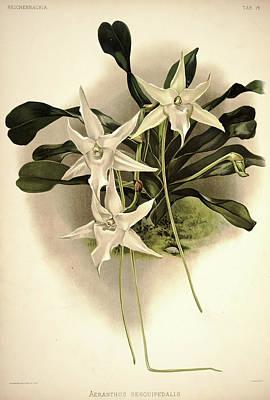 Designs Similar to Orchid, Aeranthus Sesquipedalis