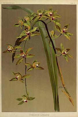 Designs Similar to Orchid, Cymbidium Lowianum