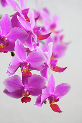 Designs Similar to Orchids by Ejla