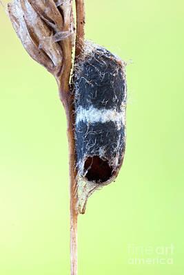 Designs Similar to Parasitoid Wasp Pupa