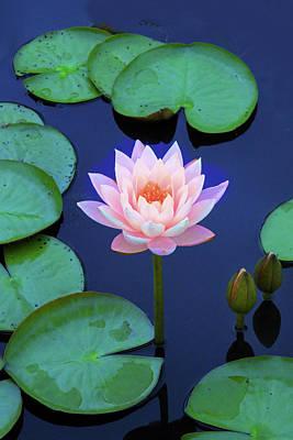 Designs Similar to Layering Lotus