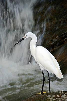 Waterbird Photographs