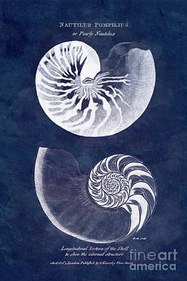 Designs Similar to White Nautilus On Blue