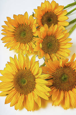 Designs Similar to Five Abstract Sunflowers