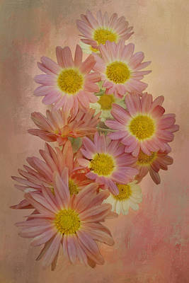 Designs Similar to Pink Daisy Mums 2