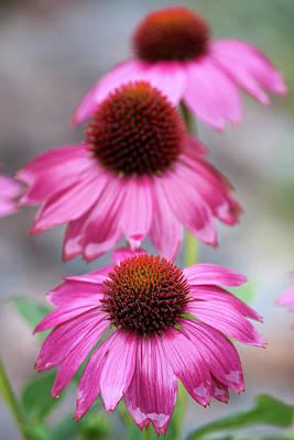 Designs Similar to Purple Cone Flower In The Rain