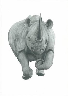 Rhinocerus Drawings