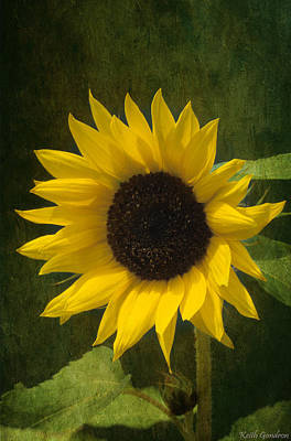 Designs Similar to Sunflower Beauty