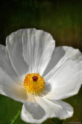Designs Similar to White Prickly Poppy