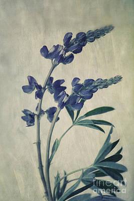 Yukon Wildflowers Wall Art