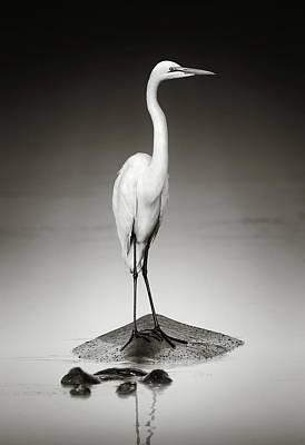 Egret Photographs