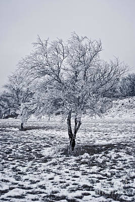 Photograph - Ice Covered Tree by James Jones