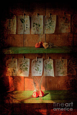Photograph - Inside the Garden Shed 01 by Alex Rowbotham