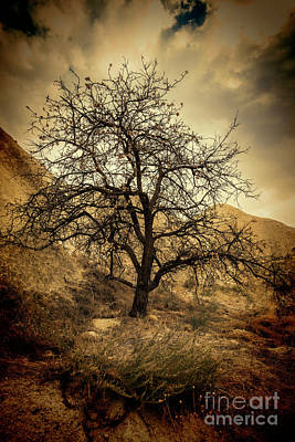 Photograph - Old tree by Roberto Giobbi