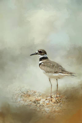 Killdeer Paintings