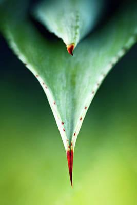 Aloe Photographs