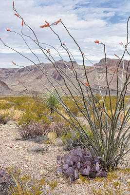 Photograph - Big Bend National Park In Spring by Cathy Neth