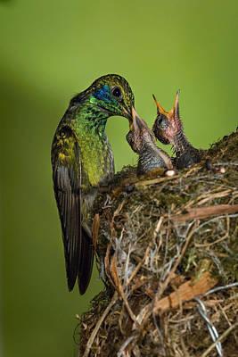 Colibri Art