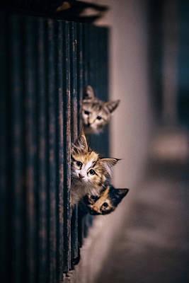 Street Cat Photographs