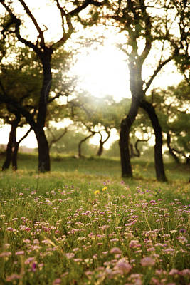 Photograph - Wildflowers and Sunlight by Alicia R Paparo