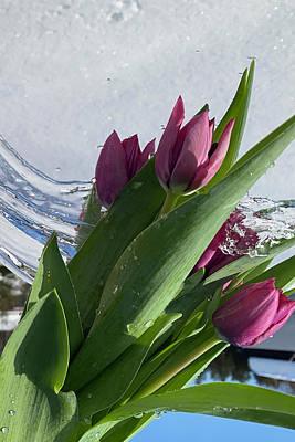 Photograph - Tulip flowers on snow background with water splash by Tamara Sushko