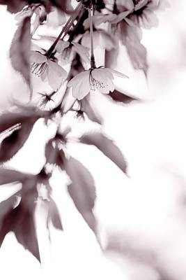 Photograph - Bloom by Yvette Louise