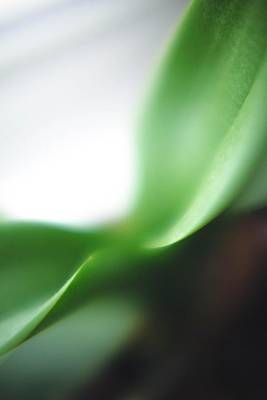 Photograph - Green by Yvette Louise