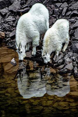Photograph - Mountain Goat by Cameron Knudsen