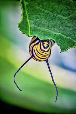 Photograph - Peek A Boo Monarch by Roberto Aloi