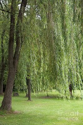 Photograph - Weeping Willow by Cornelia DeDona