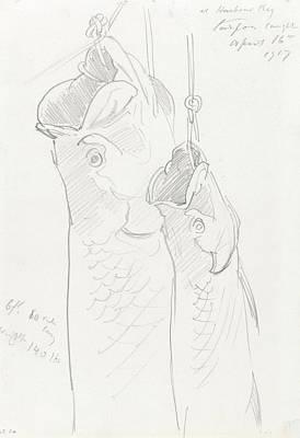 Tarpon Drawings Prints