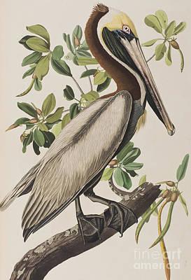 Designs Similar to Brown Pelican