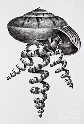 Seashells By James Williamson Art