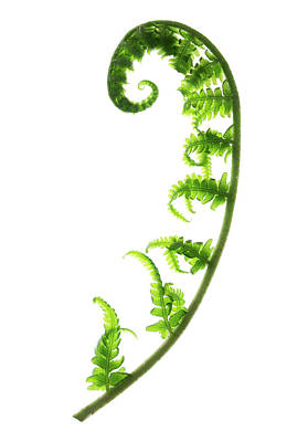 Designs Similar to Fern Frond