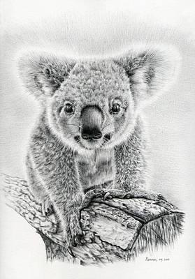 Koala Drawings