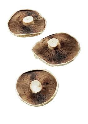 Portobello Mushroom Posters