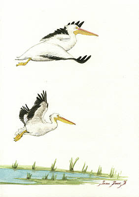 Designs Similar to The Fox And The Pelicans