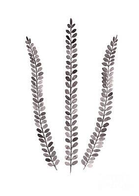 Ferns Art Prints