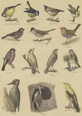 Designs Similar to Birds Beneficial To Agriculture