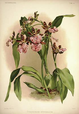 Designs Similar to Orchid, Zygopetalum Intermedium