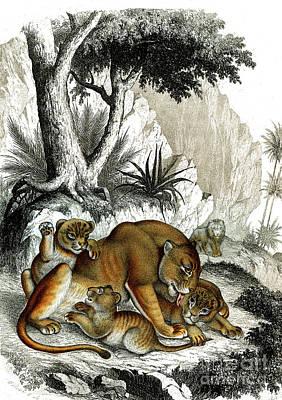 Designs Similar to Senegalese Lion