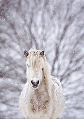 Designs Similar to Snow Horse