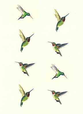 Designs Similar to Hummingbirds