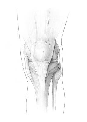 Designs Similar to Knee Ligaments