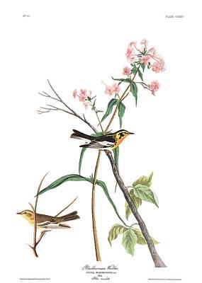 Designs Similar to Blackburnian Warbler