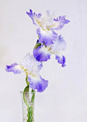 Reblooming Flowers Prints