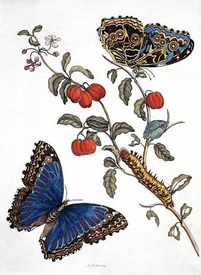 Designs Similar to Insects Of Surinam